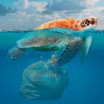 Schildkröte mit Müllsack